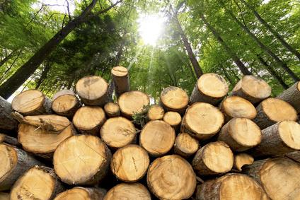 Landtag debattiert über Waldzustandsbericht 2017