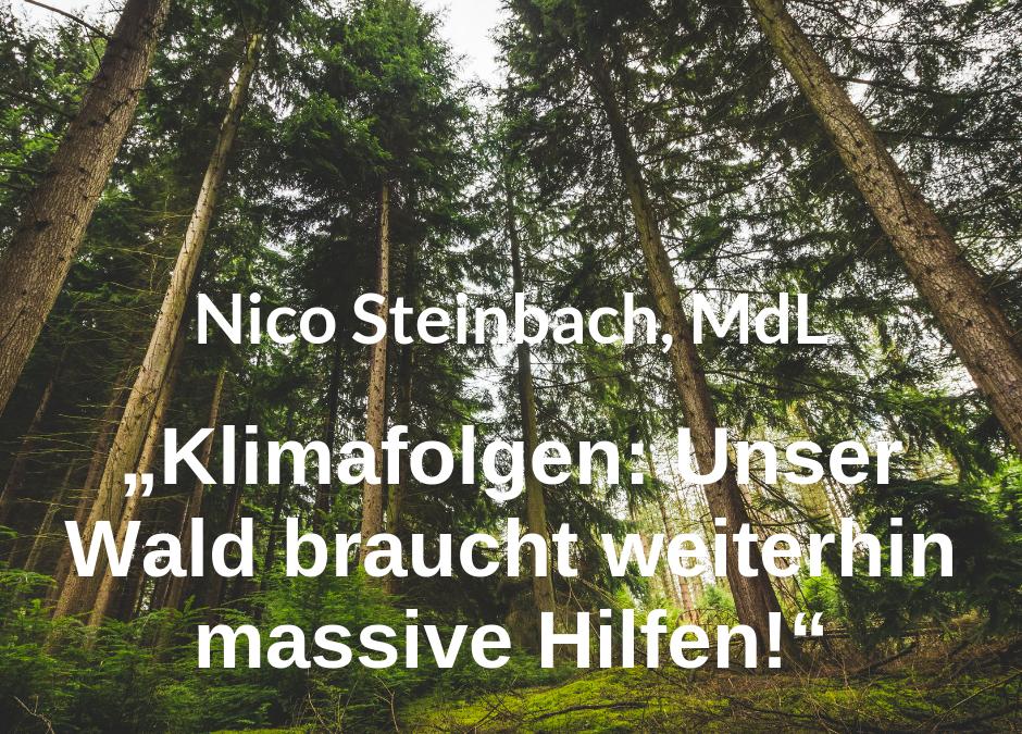 Zur aktuellen Situation der Klimaschäden im Wald erklärt Nico Steinbach, forstpolitischer Sprecher der SPD-Landtagsfraktion RLP: